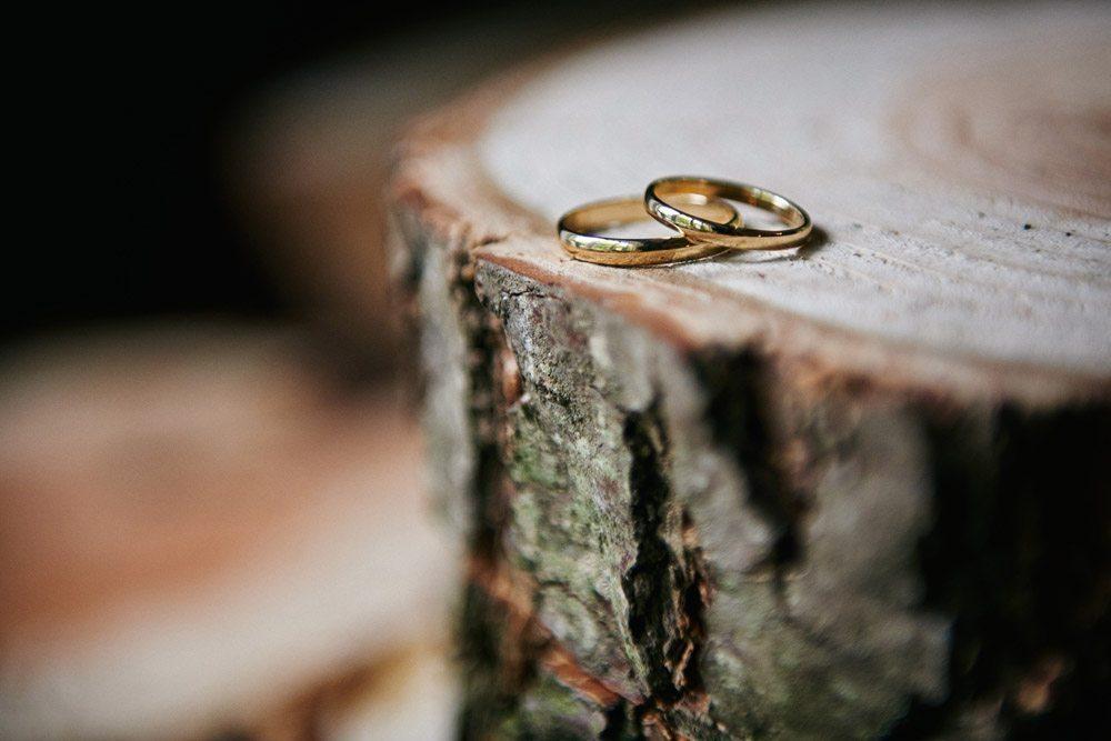 obrączki ślubne na pniu drzewa - fotografia artystyczna
