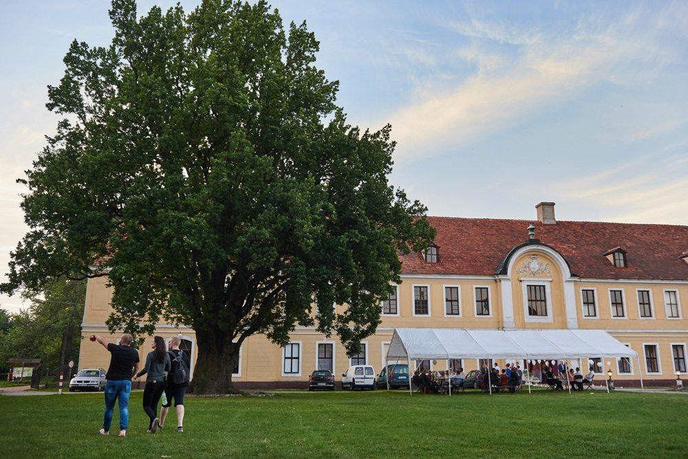 duże drzewo przed pałacem brody